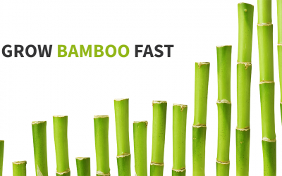 What Bamboo can Teach You About Growing Your Software Business Faster
